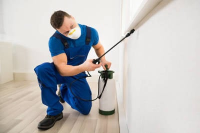 What Is Pest Management and Why Is It Important?
